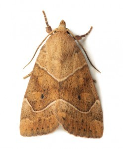 Moth Control Devon
